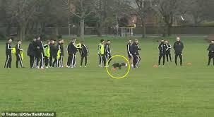 Sheffield United training - Strange dog interrupts football training session